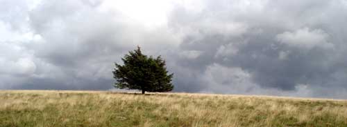 Lonely tree above Blengdale